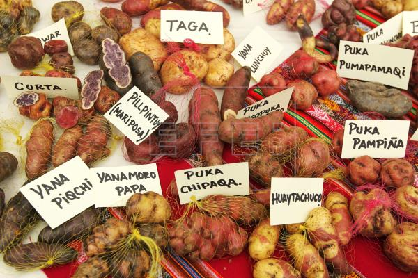 http://www.efe.com/efe/english/life/130-native-potato-varieties-identified-in-northern-peru-community/50000263-2814388